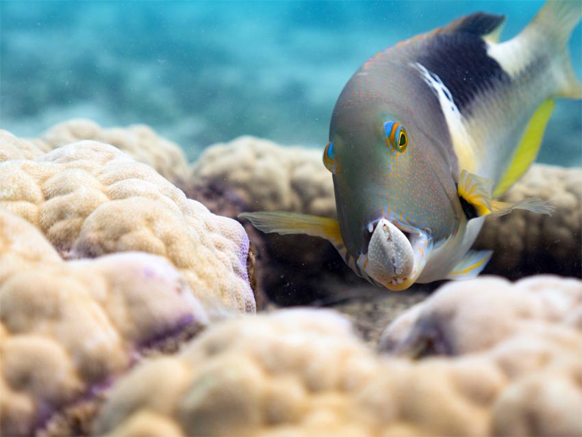 BBC's Oceans, our blue planet