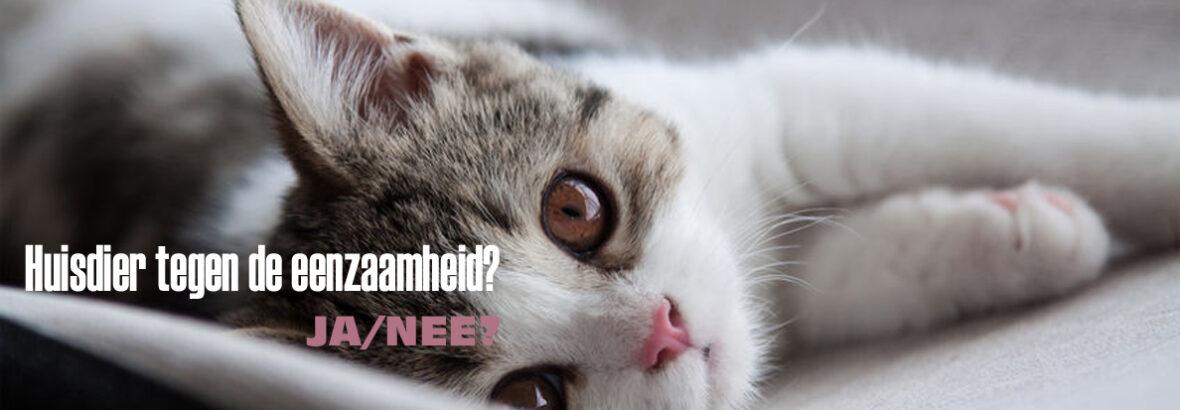 Een huisdier tegen eenzaamheid: wel of niet doen?